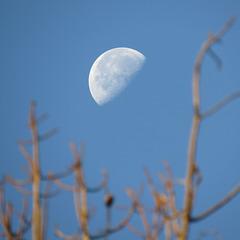 Last quarter moon (almost)