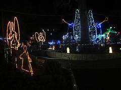 Christmas Lights Tmba Lions 2019 5957