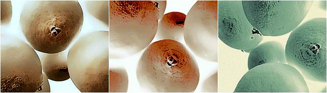 Tangelos in color