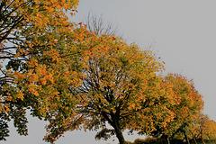 automne diagonale