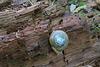 IMG 5819-001-Snail