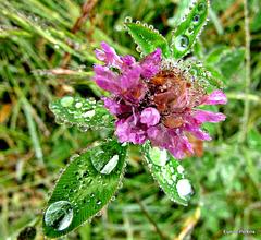 Bejeweled Weed