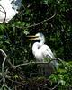 On a Nest