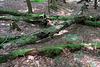IMG 5821-001-Logs & Crosses