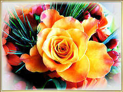 A Sunday rose... ©UdoSm