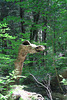 IMG 5827-002-Camel