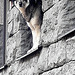 Guard....:)