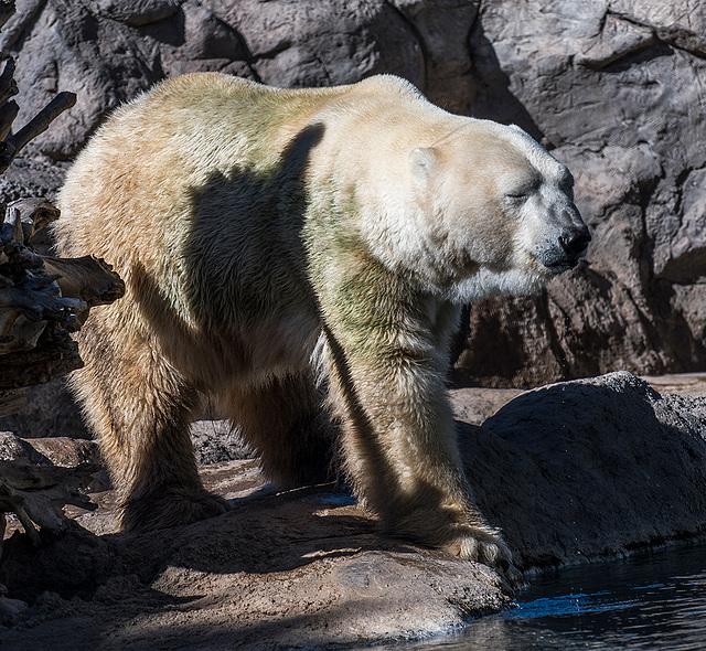 Albuquerque zoo set 215
