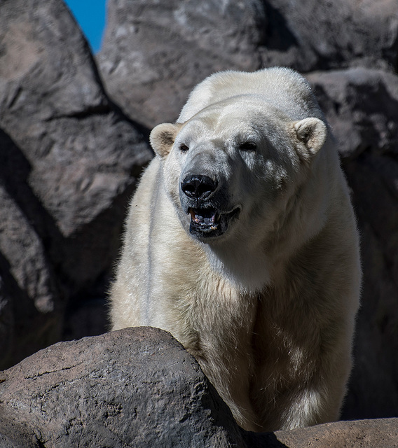 Albuquerque zoo set 216