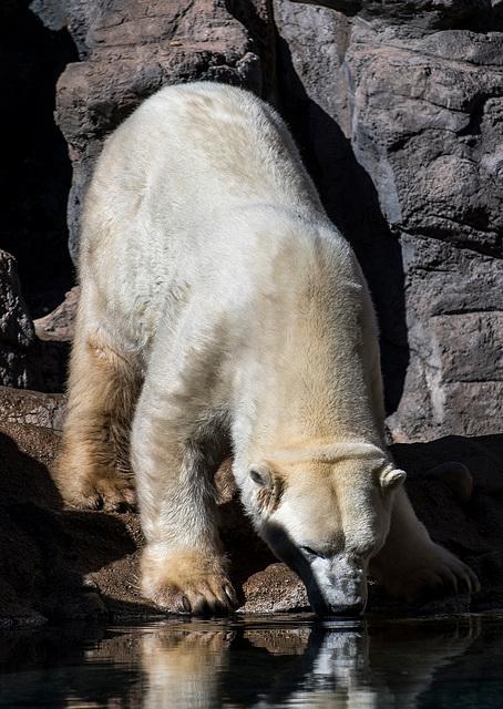 Albuquerque zoo set 217