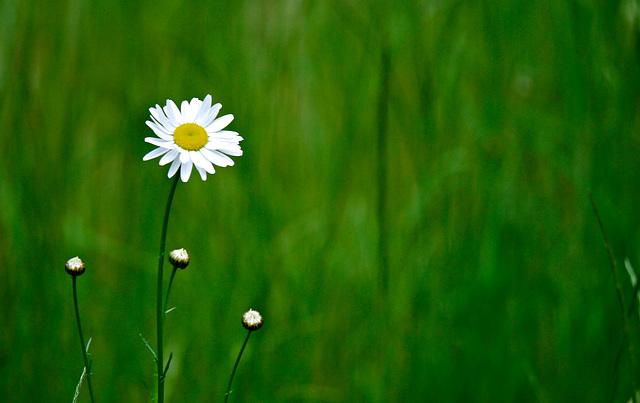 Daisy Jane