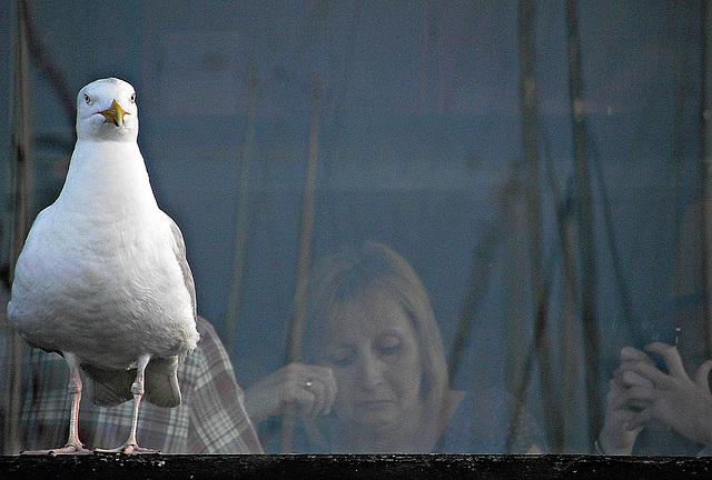Gull and Gal