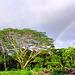 Rainbows37