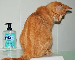 Le Chat !!!