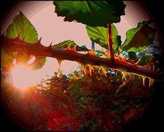 Les griffes de la canicule / The claws of the heat wave