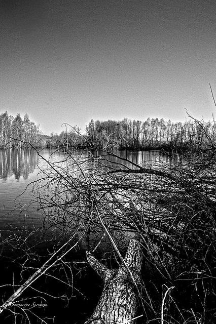 L'étang d'Episy