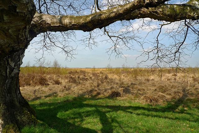 Nederland - Fochteloërveen