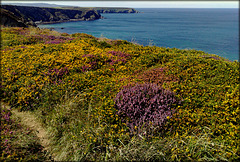 H. A. N. W. E.  everyone! North Cliffs, heather and gorse, this section sadly crumbled away these past 7 years! And a particular favourite place too.