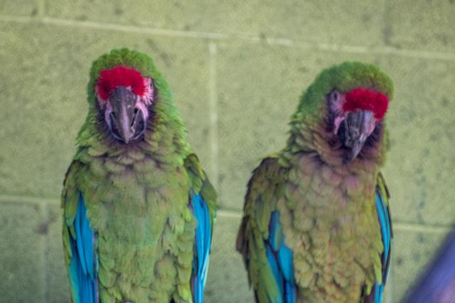Albuquerque zoo set 22