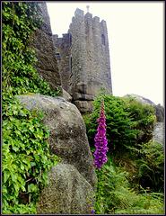 Granite, ivy, foxglove and castle.