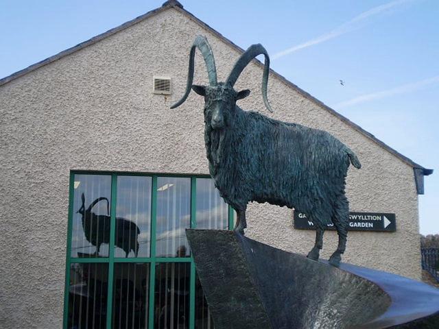 Sculpture of Kashmir goat.