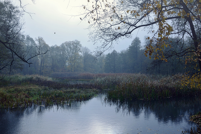 Misty Morning #1