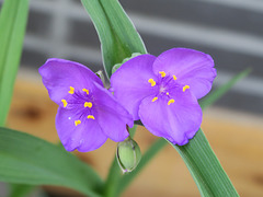 Fleurs en Corée
