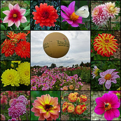 La Féérie des Dahlias à Terra Botanica