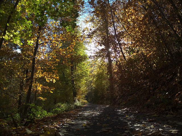 golden November