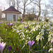 Estate Jagtlust with the early Spring Flowers... ♥