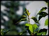 De jolies feuilles…..