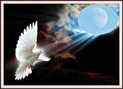 Pour un monde de paix ! Faites l'amour pas la guerre ♥