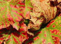 Farbenrausch im Weinberg