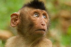 A monkey visiting the German football team....