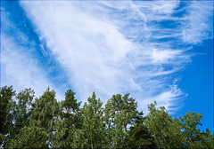 forest, sky and clouds