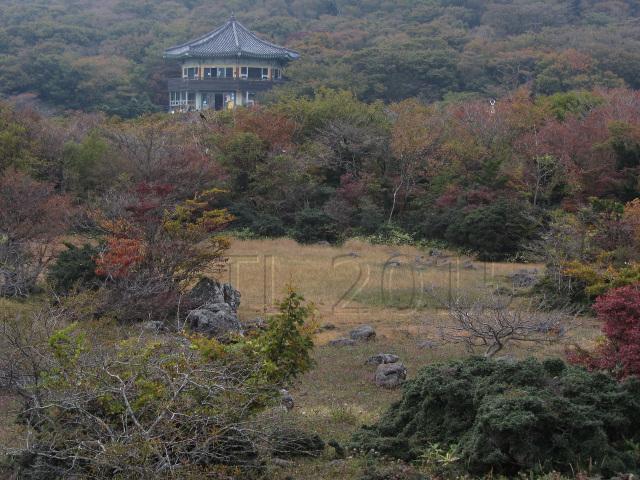제주도1100고지 Jeju Island, 1100m highland