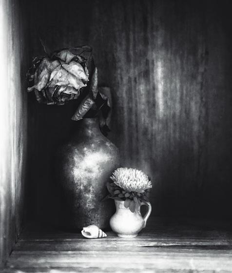 dead rose b&w