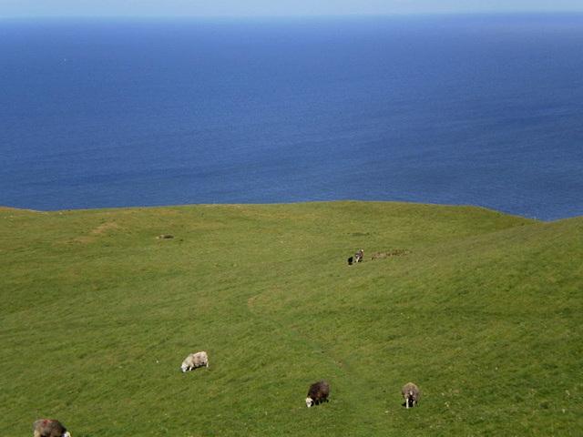 Plenty of grass for sheep.
