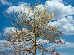 1 (43)...austria tree baum spring..frühling