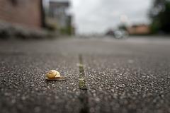 Snail (04.07.2020)