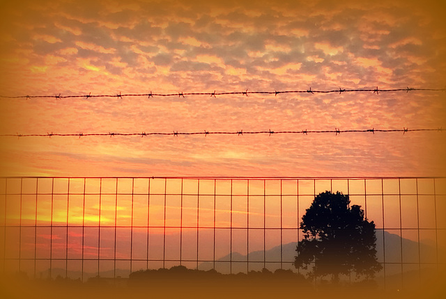 barbed wired  sunset