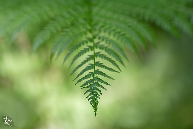 Lovely Ferns & More at Tugman State Park (+5 insets!)