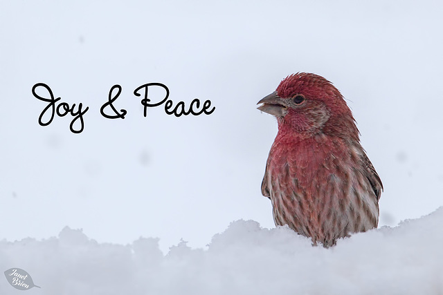 Pictures for Pam, Day 47: Joy & Peace