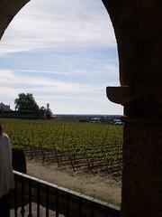 Vineyards of Bacalhôa Estate.