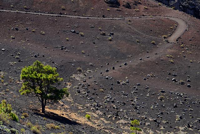 Auf dem Weg zum Vulkan Teneguía