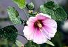 Blütenstaub