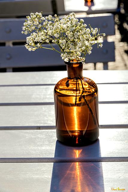 Sonnenstrahlen lassen Pflanzen wachsen ...