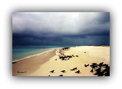 Ilot aux abords de la Grande Barrière de Corail (Australie) *** Islet near the Great Barrier Reef (Australia)
