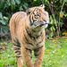 Tiger cub in its new enclosure.
