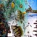 I pesci del Madagascar - (638)